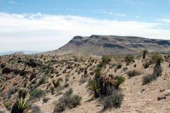 утес красного цвета каньона Стоковое фото RF