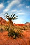 утес красного цвета Невады каньона Стоковое Фото