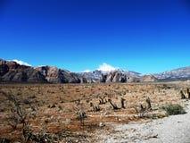утес красного цвета Невады пустыни каньона Стоковая Фотография
