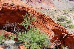 утес красного цвета парка Невады каньона национальный Стоковые Изображения