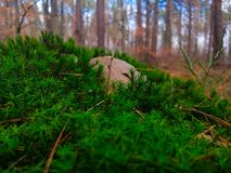Утес на мхе в лесе стоковая фотография rf