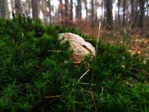 Утес на мхе в лесе стоковое фото rf