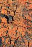утес Невады текстурирует нас Стоковые Изображения RF