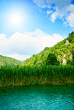 утес озера пущи Стоковые Изображения