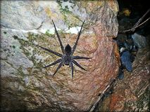 Утес паука стоковое фото rf