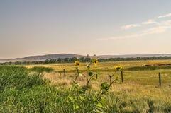 Утес печной трубы между солнцецветами Стоковое Фото