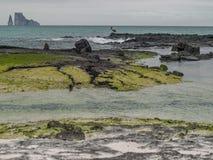Утес пеликана и брыкуньи Стоковые Изображения RF
