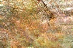 утес предпосылки пестротканый Стоковая Фотография RF