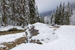 Утес, река и ели под снегом Стоковые Фотографии RF