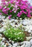 утес сада Стоковое Фото