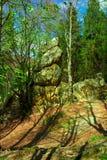 Утес среди елей в лесе стоковые изображения rf