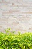 Утес стены с красивейшими зелеными листьями Стоковая Фотография