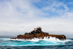 Утес с птицами моря Стоковые Фото