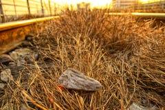 Утес, трава & заход солнца Стоковые Фото