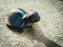 Утес черепахи Стоковые Изображения