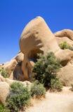 Утес черепа, дерево Иешуа Стоковая Фотография RF