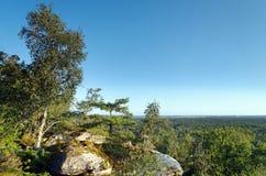 Утес biche Corne в лесе Фонтенбло стоковое изображение