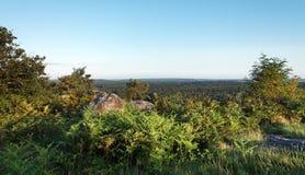 Утес biche Corne в лесе Фонтенбло стоковое фото rf