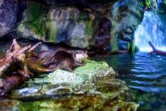 Утеха бассейна аквариума стоковые изображения