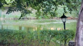 Утихомиривая взгляд ландшафта: тихий парк с прудом или рекой, деревьями, кустами и лампой видеоматериал