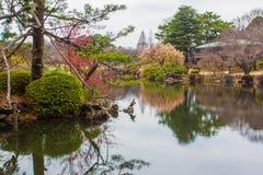 Утка в ПАРКЕ SHINJUKU GYOEN Стоковое Фото