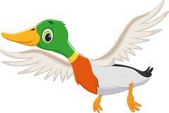 Утка летания шаржа Стоковая Фотография RF
