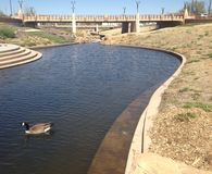 Утка на малом реке Стоковые Фотографии RF