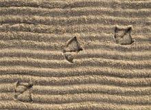 утка печатает песок Стоковое Изображение