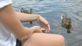 Утка питания девушки на озере сток-видео
