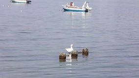 Утка плавает рядом с руинами и маленькими лодками, в районе Греции Thesaloniki видеоматериал