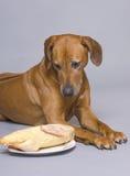утка собаки Стоковая Фотография