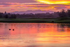 Утки во время захода солнца Стоковое фото RF