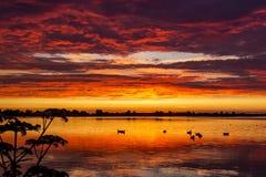 Утки в воде во время ослеплять захода солнца на Plas Zoetermeerse озера, Zoetermeer, Нидерланд стоковая фотография rf