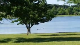 Утки в воде Стоковое фото RF