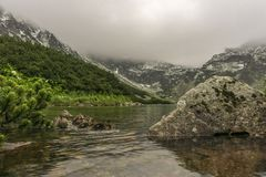 Утки в красивом чистом озере горы Черный пруд Gasienicowy Стоковые Изображения RF