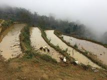 Утки в террасах PA SA, Вьетнаме Стоковые Фотографии RF
