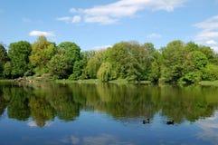 Утки имеют остатки на озере Стоковое фото RF