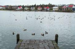 Утки и гусыни на озере Стоковые Изображения