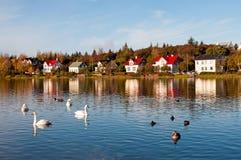 Утки и гусыни на озере Tjornin Стоковое Фото