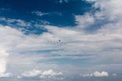 Утки клина Стоковые Изображения RF