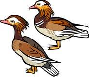 Утки мандарина иллюстрация штока