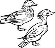2 утки мандарина бесплатная иллюстрация