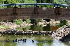 Утки на береге озера Стоковые Изображения RF