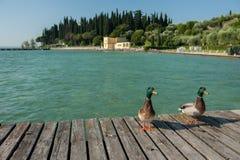 Утки на озере Garda, Италии стоковое изображение