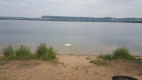 утки озера заколдовывая, озера Стоковая Фотография RF