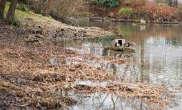 Утки около пруда Стоковое Изображение