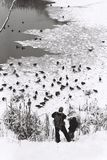 Утки питания отца и сына стоковое фото rf