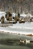 2 утки плавая в замороженном озере стоковое фото rf