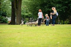 Утки семьи подавая в парке стоковые изображения