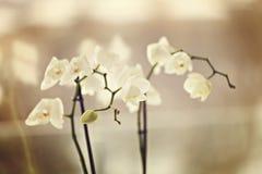 Утлые орхидеи Стоковое фото RF